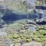 Rivière le Chéran – Sortie des gorges calcaires à Cusy- Mas