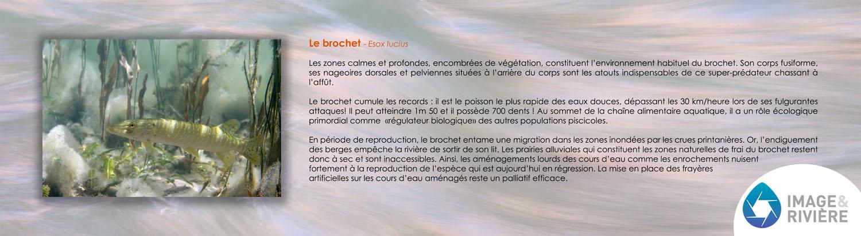 brochet_1