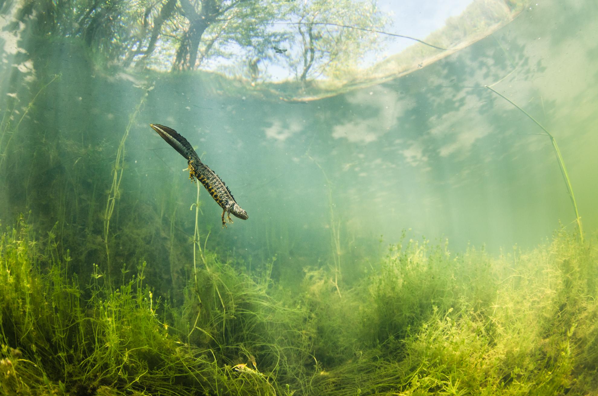 La Salamandre 9